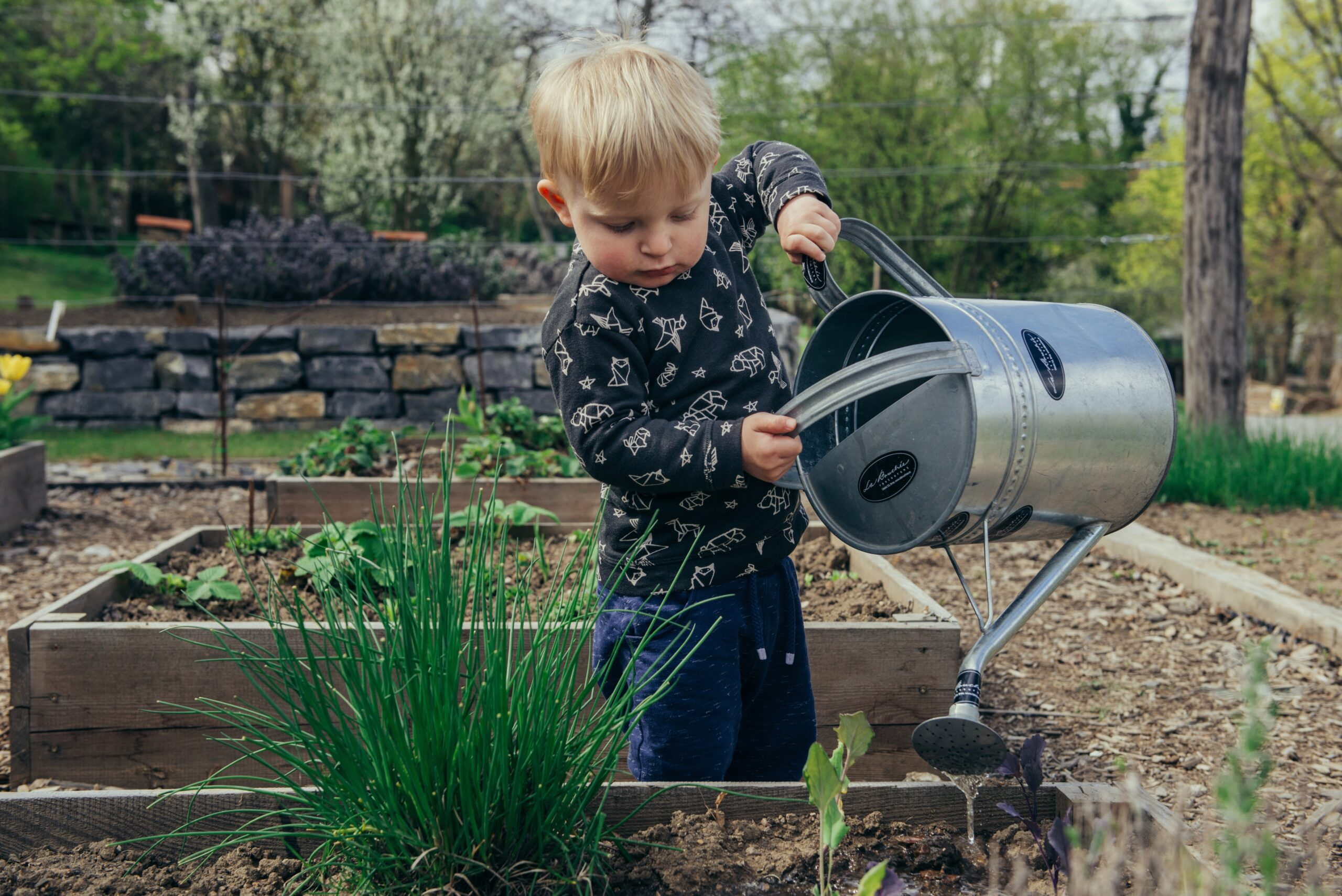 little boy with a watering can in a garden